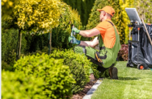 lawn care adelaide